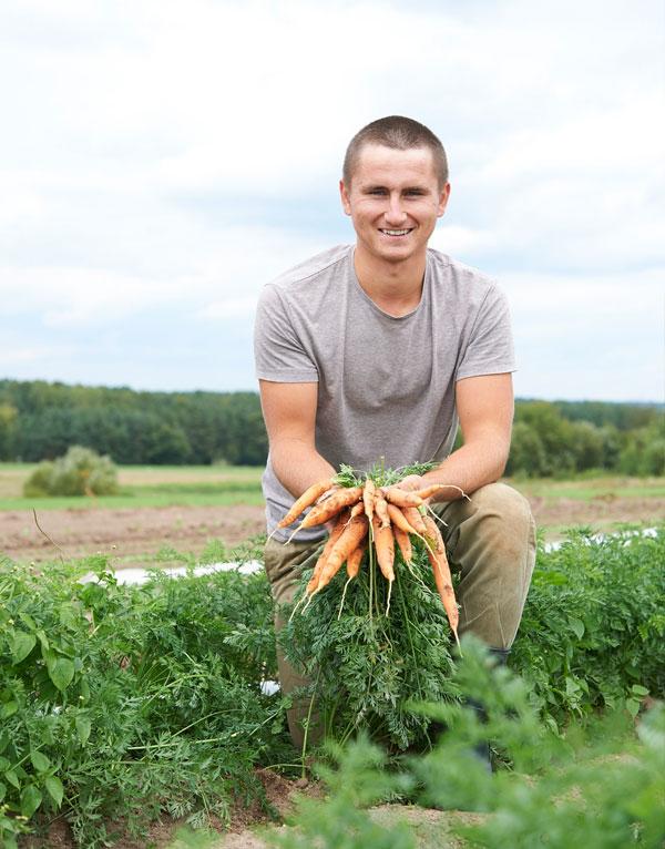 Regionales Bio-Gemüse frisch vom Feld