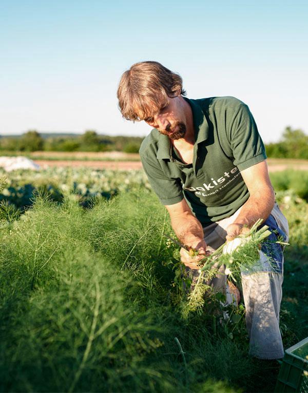 Regionales Bio-Gemüse frisch vom Bauern