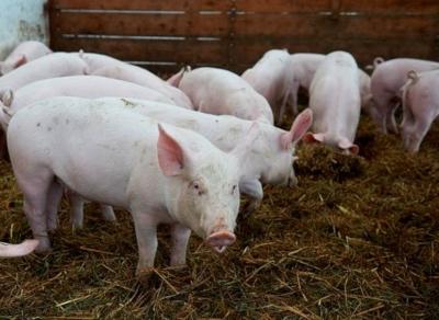Bio-Fleisch aus der Region