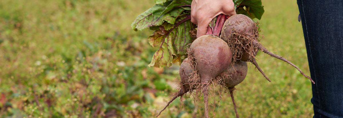 Obst, Gemüse und andere Leckereien aus der Region